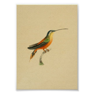 Vintage 1830 Hummingbird Print Orange Yellow