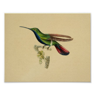 Vintage 1830 Hummingbird Print Red Blue
