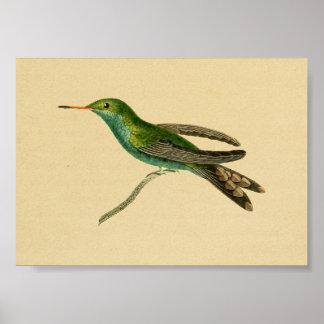 Vintage 1830 Hummingbird Print Turquoise