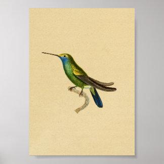 Vintage 1830 Hummingbird Print Yellow Blue