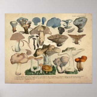 Vintage 1831 Mushroom Variety Blue Brown Print