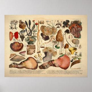 Vintage 1831 Mushroom Variety Brown Yellow Print