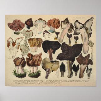 Vintage 1831 Mushroom Variety Fungus Brown Print
