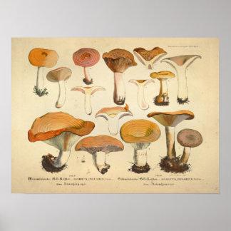 Vintage 1831 Mushroom Variety Orange Yellow Print