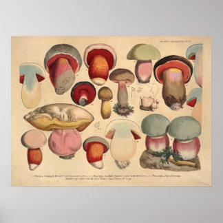 Vintage 1831 Mushroom Variety Red Blue Print