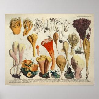 Vintage 1831 Mushroom Variety Red Brown Print