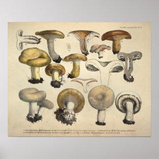 Vintage 1831 Mushroom Variety Yellow Brown Print