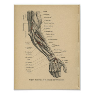 Vintage 1888 German Anatomy Print Arm Hand