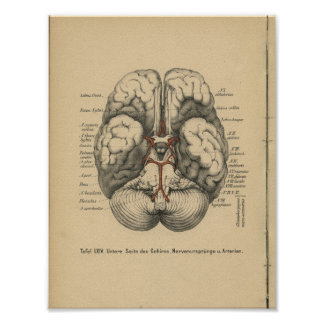 Vintage 1888 German Anatomy Print Brain