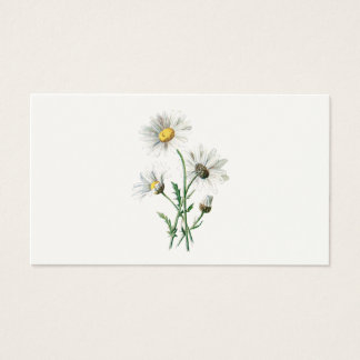 Vintage 1902 Daisies Old Wild Flower Illustration Business Card