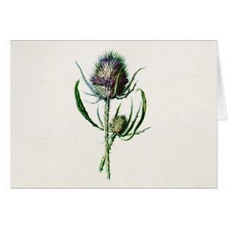 Vintage 1902 Old Scottish Thistle Wild Flower Card