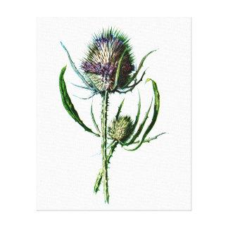 Vintage 1902 Scottish Thistle Antique Wild Flower Canvas Print