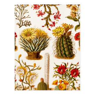 Vintage 1911 Cactus Flower Old Floral Illustration Postcard
