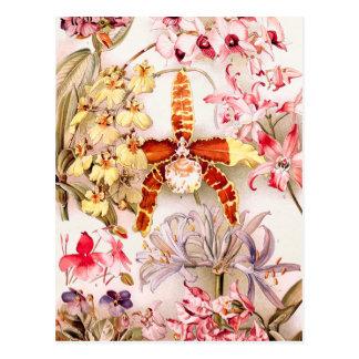 Vintage 1911 Orchid Pink Flower Old Illustration Postcard