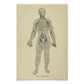 Vintage 1920 Lymphatic System Anatomy Art Print