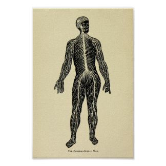 Vintage 1920 Nervous System Anatomy Art Print