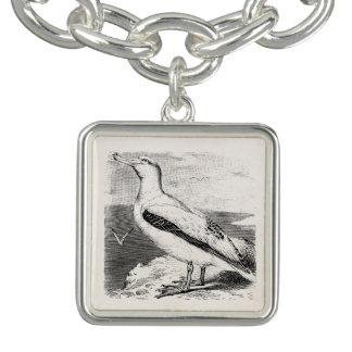 Vintage Albatross Seagull Sea Gull Gulls Seabird