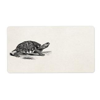 Vintage American Box Tortoise - Turtle Template