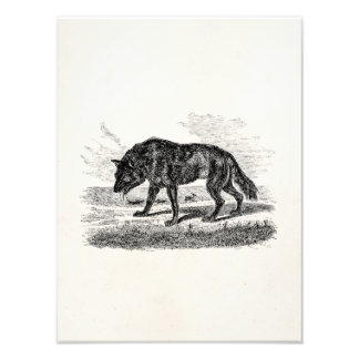 Vintage American Wolf 1800s Wolves Illustration Photo Print