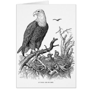 Vintage - An Eagle and Its Nest (Blank Inside), Card