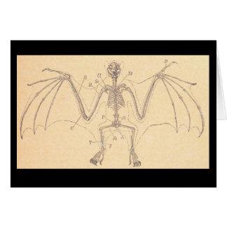 Vintage Anatomical Bat Skeleton Illustration Card