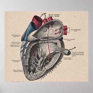 Vintage Anatomical Heart Diagram Poster