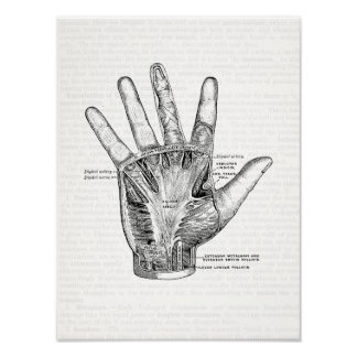Vintage Anatomy Art The Palm of the Hand Poster