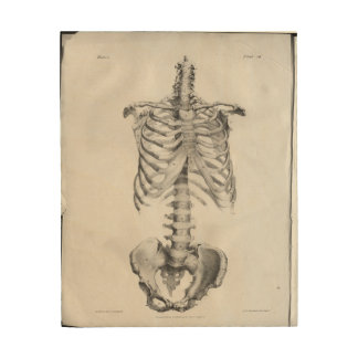 Vintage Anatomy Artwork Skeleton Wood Canvas