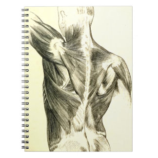 Vintage Anatomy | Back Muscles (circa 1852) Notebook
