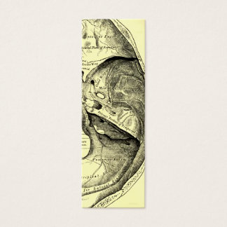 Vintage Anatomy | Base of the skull Inner surface Mini Business Card