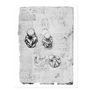 Vintage anatomy drawing of a foetus postcard