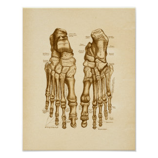 Vintage Anatomy Illustration Foot Bones Poster