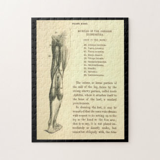 Vintage Anatomy | Leg Muscles Jigsaw Puzzle