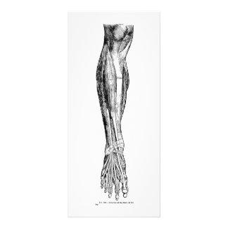 Vintage anatomy muscles of the leg in black custom rack cards