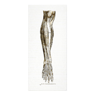 Vintage anatomy muscles of the leg sepia rack card template
