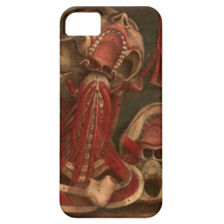 Vintage Anatomy | Neck and Face iPhone 5 Cases