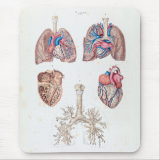 Vintage Anatomy of Human Heart and Lungs Mouse Pad