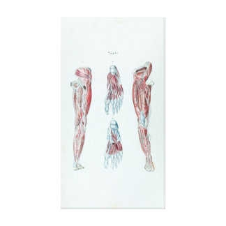 Vintage Anatomy of Human Legs and Feet Canvas Print