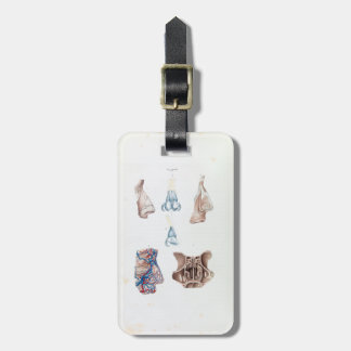 Vintage Anatomy of the Human Nose and Sinuses Luggage Tag