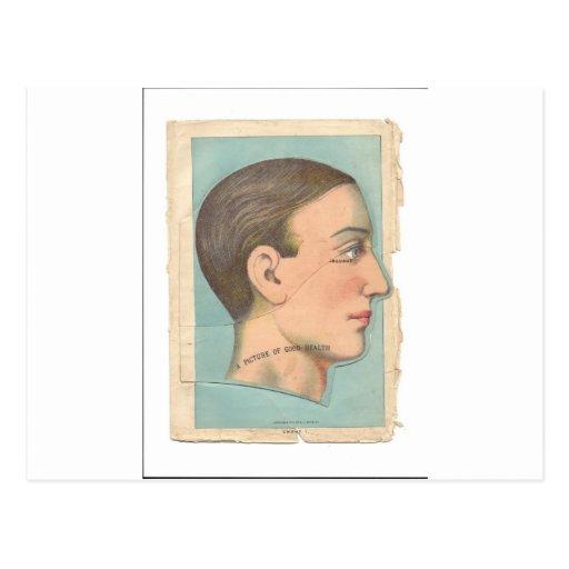 Vintage Anatomy Photo Head Postcards
