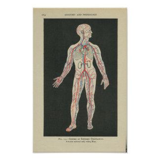 Vintage Anatomy Print Blood Vessels