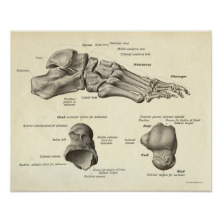 Vintage Anatomy Print Bones of Foot