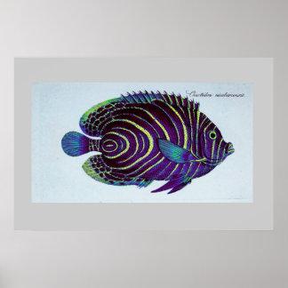 vintage angelfish print
