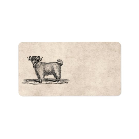 Vintage Angora Goat Illustration - 1800's Goats Label