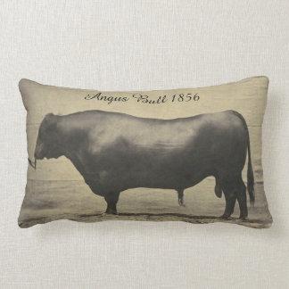 Vintage Angus Bull Photograph Lumbar Cushion