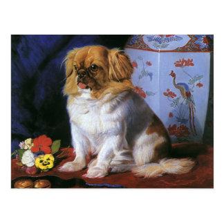 Vintage Animals, Toy Pekingese Puppy Dog Postcard