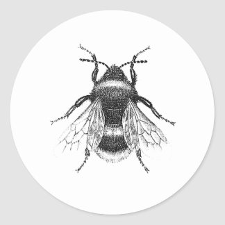 Vintage, Antique Bumble Bee Illustration Classic Round Sticker