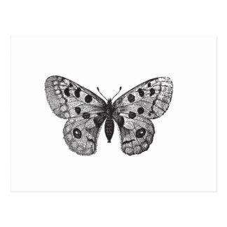 Vintage Apollo Mountain Butterfly Postcard