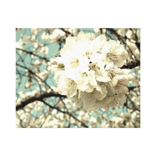Vintage apple blossom stretched canvas prints