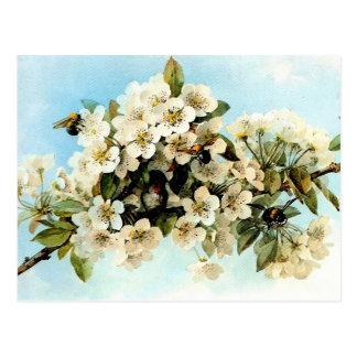Vintage Apple Blossoms Postcard